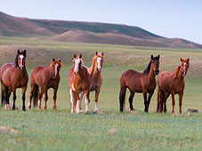 Wild Horse Ranch Wyoming